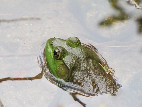 Story of the Month: The Kindred Frog
